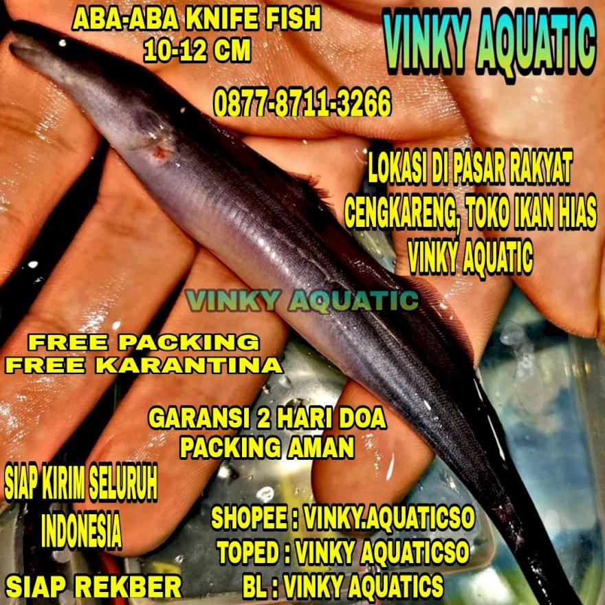 ABA-ABA KNIFE FISH 10-12 CM
