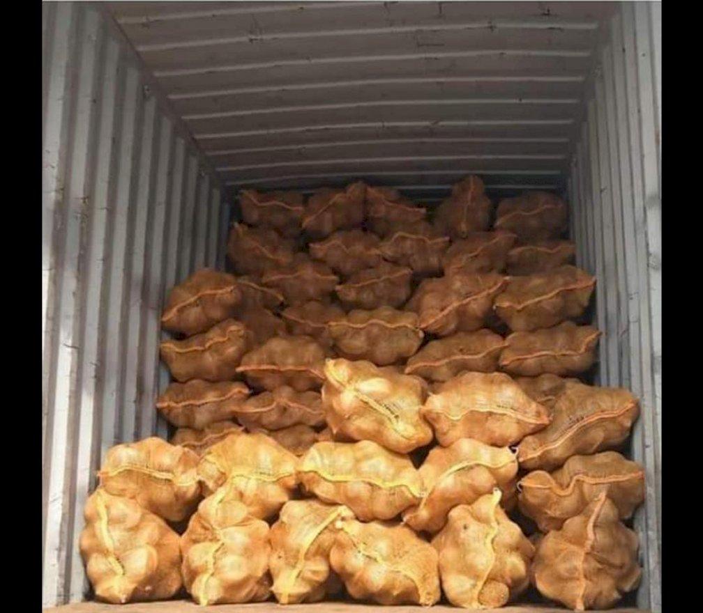 jual kelapa hasil pertanian