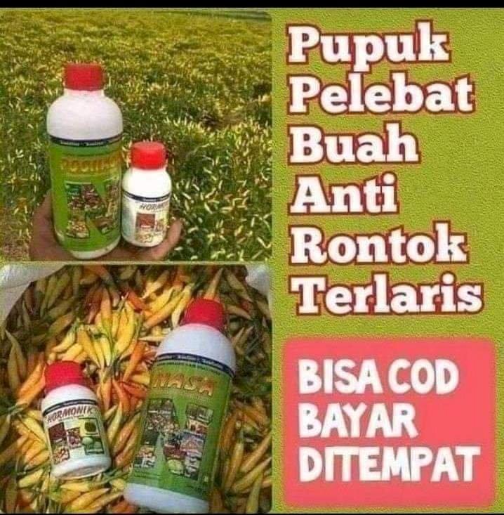 Paket Budidaya Cabai