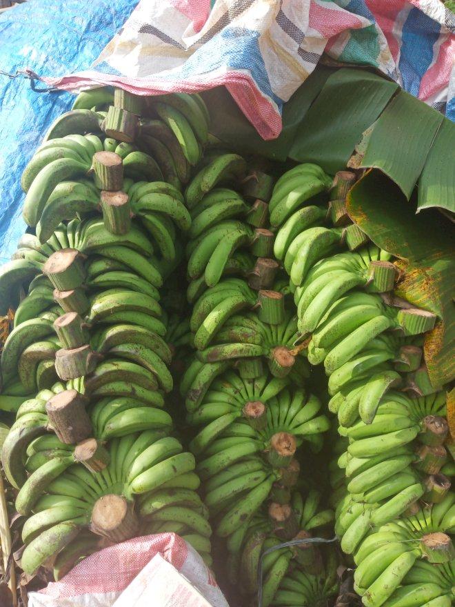 pisang barangan