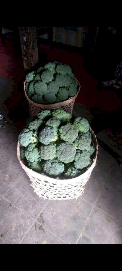 Brokoli Super