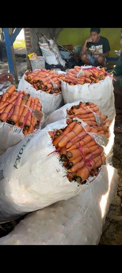 wortel lokal panen raya