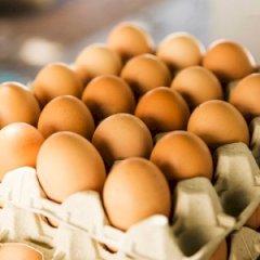 Eminen Telur